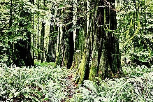 Fern and Trees by Brian Sereda