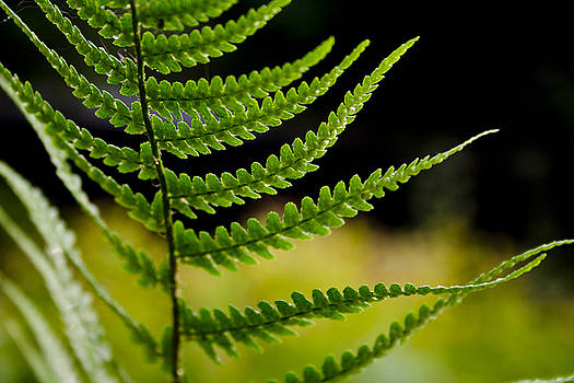 Bamalam  Photography - Fern