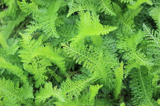 Fern by Beth Vincent