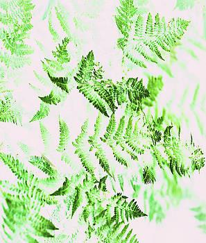 Fern Forest by Uma Gokhale