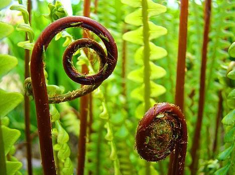 Baslee Troutman - Fern Fronds Fine Art Photography Forest Ferns Green Baslee Troutman