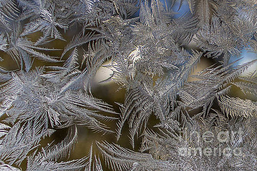Fern Frost by Marj Dubeau