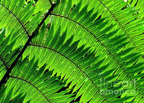 Fern in Afternoon Light by Ranjini Kandasamy
