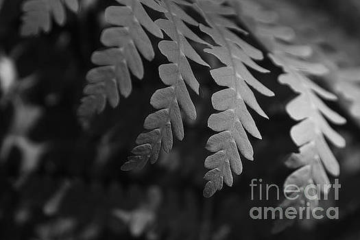Fern In BnW 1 by Joe Geraci