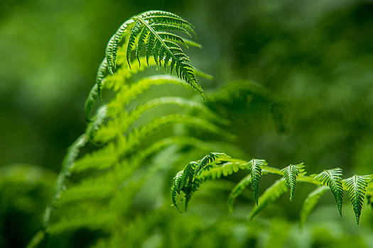 Chris Bordeleau - Fern Intersect