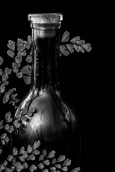 Guy Shultz - Fern N Wine