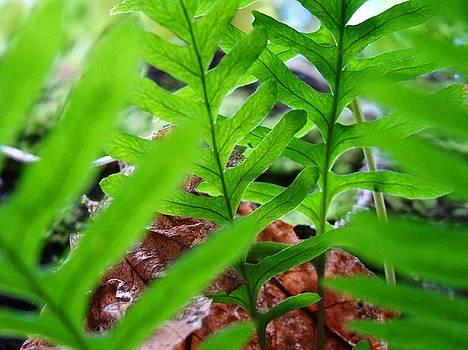 Baslee Troutman - FERNS Art Prints Forest Ferns Giclee Art Prints Basle Troutman