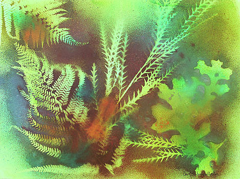 Ferns by Carol Schindelheim