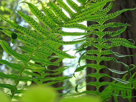 Baslee Troutman - FERNS GREEN REDWOOD FOREST FERN Giclee Art Prints Baslee Troutman