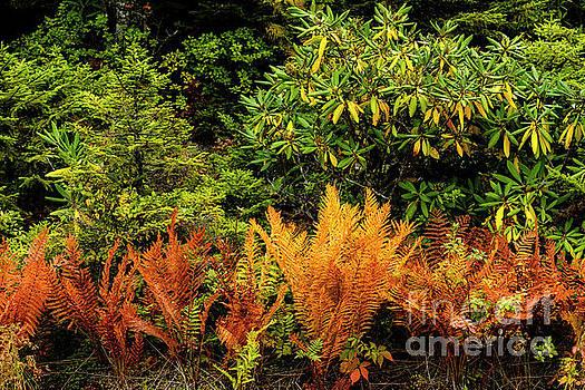 Ferns in Fall Color  by Thomas R Fletcher