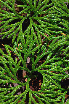 Ferns Looking at You by Bruce Gourley