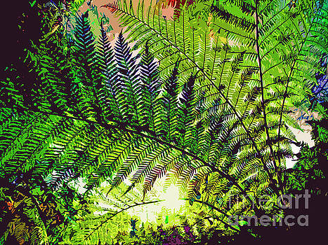 Ferns by Maureen Tillman