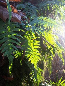 Ferns of Light by Ken Day