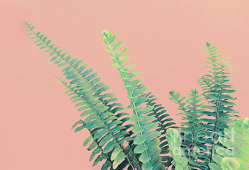 Ferns on Pink by Emanuela Carratoni