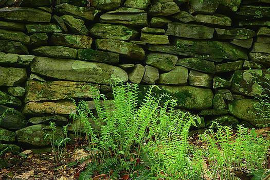 Raymond Salani III - Ferns on the Maryland Appalachian Trail