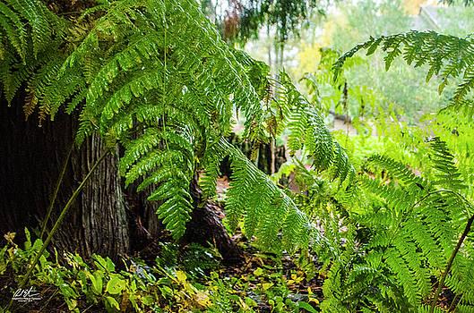 Ferns by Richard Estrada