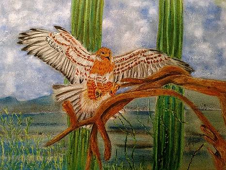 Ferrugenous Hawk by Joan Mansson