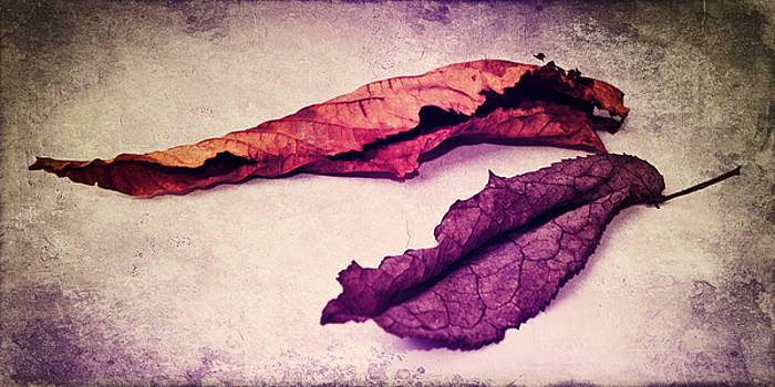 Angela Doelling AD DESIGN Photo and PhotoArt - feuilles d