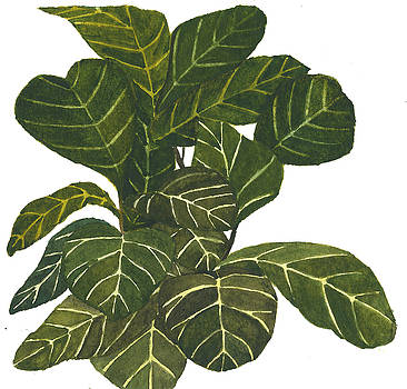 Fiddle Leaf Fig by Garima Srivastava