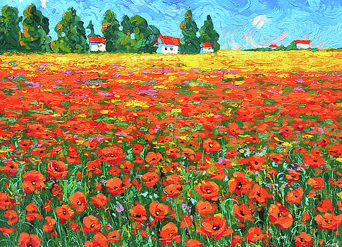 Field and poppies by Dmitry Spiros
