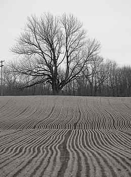 Field and Tree by Andrew Kazmierski