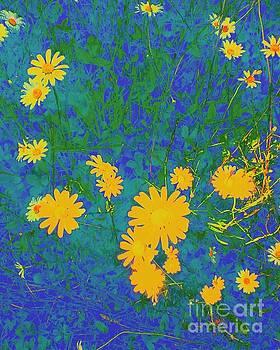 Field Flowers by Eve Penman