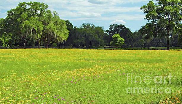Field Full Of Wildflowers by D Hackett