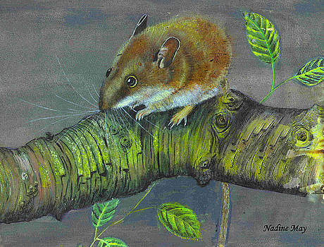 Field mouse by Nadine May