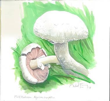Michael Earney - Field Mushroom