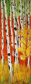Field Of Birch Tree's During Autumn #3 i by Portland Art Creations