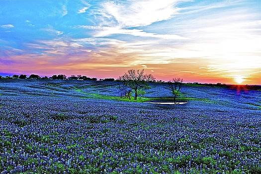 Field Of Blue Lum by John Babis
