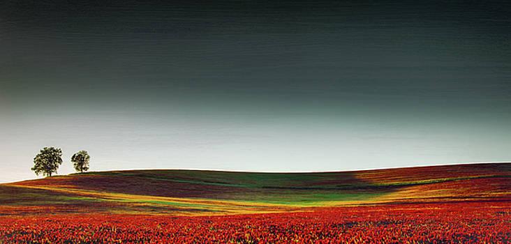 Field of Clover  by Don Schwartz