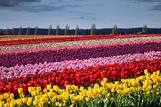 Field of Color by Rick Lawler