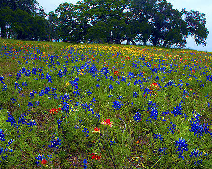 Field of Colors by Jim E Johnson