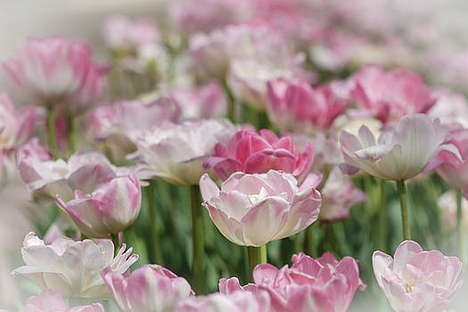 Field of Elegance by ArtissiMo Photography