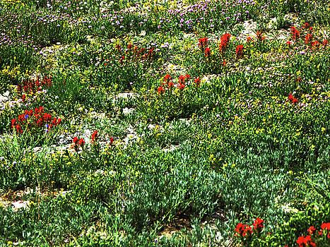 Field of Flowers by Alan Socolik
