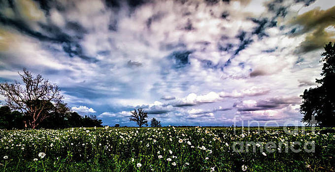 Field Of Flowers by JB Thomas