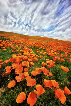 Field of Flowers by Nicki Frates