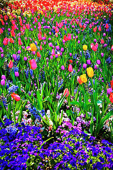Tamyra Ayles - Field of Flowers