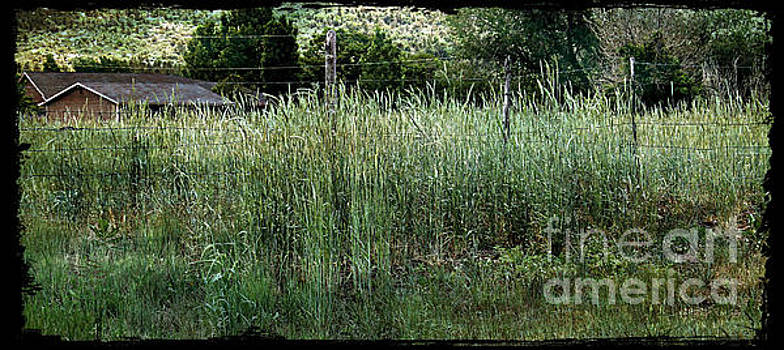 Field of Grass by Beauty For God