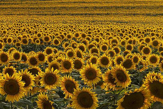 Scott Bean - Field of Happiness