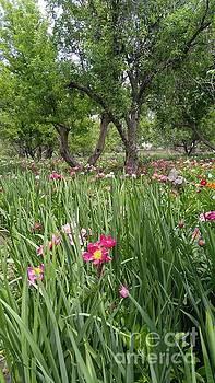 Field of Peonies by Sallie Anderson