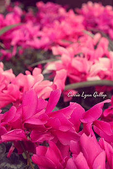 Field of Pink by Carrie Gallop