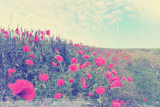 field of red poppies by Iuliia Malivanchuk by Iuliia Malivanchuk