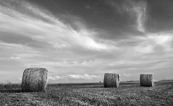 Field of Round bales of hay after harvesting by Michalakis Ppalis
