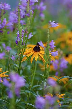 Field of Summer Blooms by Susan Schmidt