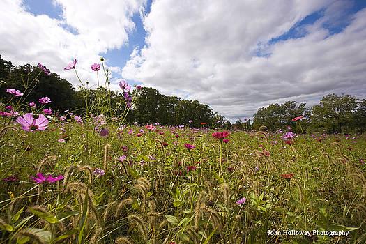 Field of Wildflowers by John Holloway