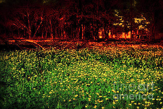 Field Of Yellow by JB Thomas