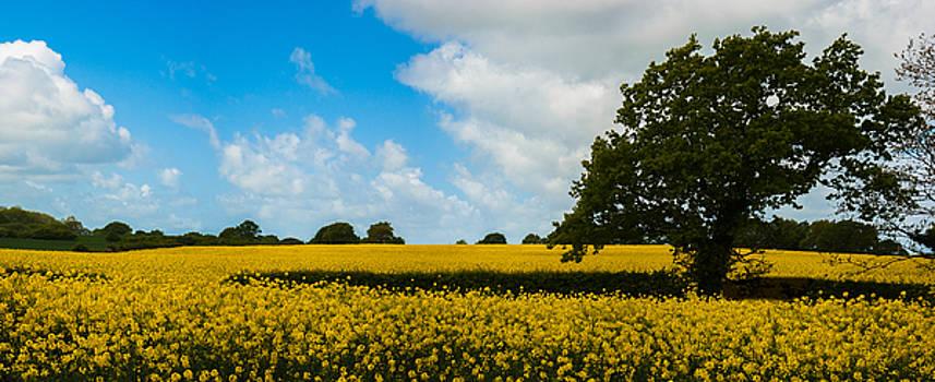 Field of Yellow by Nigel Spencer