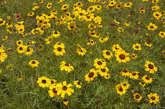 Robert Anschutz - Field of Yellow